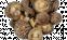 Гриби шиітаке